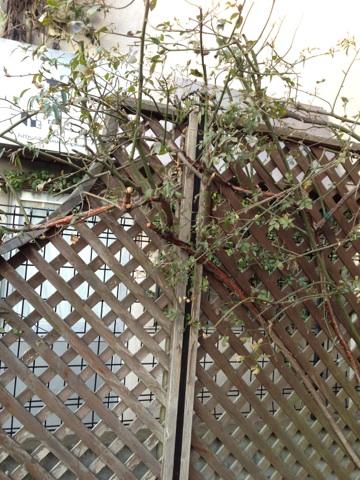 http://www.wildroquette.com/blog/IMG_7782.jpg